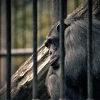"""-sever- """"prisoner"""" (2009-02-08 05:45:50) komentarzy: 1, ostatni: O jaki smutny :)"""