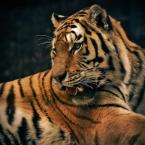 "-sever- ""hunter"" (2009-02-08 21:32:11) komentarzy: 1, ostatni: Piękny i foto++ Mam takiego podobnego kota."