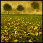 """jakiś ktoś """"jesiennie"""" (2009-02-16 01:34:18) komentarzy: 15, ostatni: Super"""