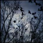 """ajsikel """"- allegory -"""" (2009-02-16 19:10:59) komentarzy: 7, ostatni: niezłe"""