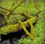 """kops """"mechwarrior 2"""" (2009-02-17 15:55:21) komentarzy: 4, ostatni: bardzo ...zielono :)"""