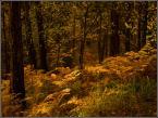 """kariola """"Obrazki ze Stare Baśni ...  czwarty"""" (2009-02-19 20:16:21) komentarzy: 16, ostatni: Taki złocisty dywan, nie dla każdego jest usłany."""