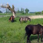 """silnik """"Konie polskie, piekne duze zywe konie"""" (2009-02-20 00:15:14) komentarzy: 18, ostatni: kadr prawie udany,artystyczna nieostrosc dodaje klimatu....sehr gut !!!"""