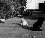 """dogfog """"stereotypy!!!"""" (2009-02-23 16:52:20) komentarzy: 21, ostatni: z prawej troszkę miejsca by się przydało, tak odrobinę ;)"""