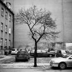 """Carlos Gustaffo """"sam w wielkim mieście..."""" (2009-03-02 09:31:43) komentarzy: 20, ostatni: a to jest bardzo dobre i niedocenione"""