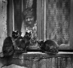 """h h a n a """"Kocia Mama  ;-) (i Jej podopieczni)"""" (2009-03-02 22:44:12) komentarzy: 80, ostatni: Świetny moment. Świetne zdjęcie :)"""