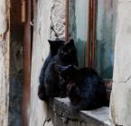 """asiasido """"koty trzy"""" (2009-03-03 00:54:56) komentarzy: 27, ostatni: :) lubię"""