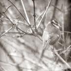 """Tarantella """""""" (2009-03-08 14:13:03) komentarzy: 1, ostatni: cichutko tu tak... i niech juz tak zostanie... ladnie.."""