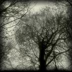 """zbigniew-en """"................"""" (2009-03-08 21:38:15) komentarzy: 15, ostatni: uwielbiam takie zdjecia! I kwadrat i drzewa:) super:)"""