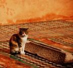 "asiasido ""strażnik czasu 2"" (2009-03-09 11:13:04) komentarzy: 52, ostatni: fajne foto"