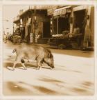 """wizental """"together"""" (2009-03-10 22:11:24) komentarzy: 8, ostatni: Zupełnie jak u mnie. Też mi dziki biegają po ulicy."""