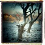"""ennio """"***"""" (2009-03-12 19:37:53) komentarzy: 21, ostatni: Tej zimy, właściwie jeszcze jesieni po raz pierwszy spadł szron na ziemię. Byłam nieco zdziwiona, bo nocą jeszcze nic nie zapowiadało zmiany pogody. Byłam u babci i piece grzały wtedy już pełną parą.Zdziwiła mnie ta dziwna różaność poranka, tak..."""