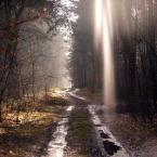 """kaszanka_84 """"...."""" (2009-03-14 09:35:42) komentarzy: 3, ostatni: Promyk nadzieji na wiosnę.....;)"""