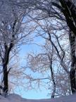 """Maciek Froński """"Sklepienie niebieskie"""" (2009-03-18 11:03:09) komentarzy: 1, ostatni: Niezauważone i nie docenione"""