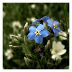 """BiTi """"..."""" (2009-03-18 18:50:45) komentarzy: 3, ostatni: a u mnie zima  dziś:( ładne"""