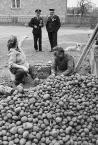 """Slawekol """"Pogwarki przy przebieraniu ziemniaków"""" (2009-03-20 12:59:14) komentarzy: 34, ostatni: OSP ma wolne..."""