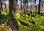 """robert37 """"Leśny dywanik.."""" (2009-03-25 16:55:03) komentarzy: 19, ostatni: Ale proponuję jeszcze wybrać się kiedyś do Skandynawii Tam są dopiero lasy a jakie światełko bo to na północy jest :-)"""