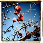 """ennio """"***"""" (2009-03-28 21:09:58) komentarzy: 9, ostatni: Moc szczegółu. Jak widac, drzewa/krzewy posiadają różne i ciekawe kształty"""