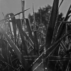 """Maldek """"co w trawie piszczy..."""" (2009-03-29 18:15:17) komentarzy: 6, ostatni: fajne"""