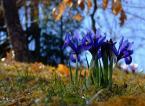 """wedrowiec1 """"Barwy wiosny2"""" (2009-04-02 22:21:40) komentarzy: 2, ostatni: Kocham taką wiosnę"""