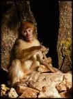 "atamana ""makak"" (2009-04-04 18:39:34) komentarzy: 0, ostatni:"