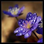 """M_A_R_E_K """"Przyjaciółki wiosny"""" (2009-04-05 10:36:59) komentarzy: 33, ostatni: swietne"""