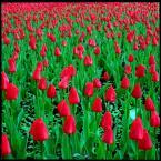 """CiasteczkowyPotwór """"..."""" (2009-04-05 17:57:05) komentarzy: 7, ostatni: pięknie!"""