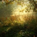 """dogfog """"W zapomnianym ogrodzie..."""" (2009-04-08 14:07:56) komentarzy: 35, ostatni: Magia światła"""