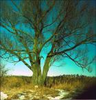 """irmi """""""" (2009-04-16 20:00:07) komentarzy: 3, ostatni: folii ;-)))))i to niebieskiej ;>"""