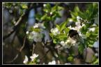 """popo007 """"kręci bąka;)"""" (2009-04-19 14:07:36) komentarzy: 2, ostatni: Niemoc wiosenna nastała.."""