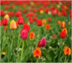 """shenice """"..."""" (2009-04-19 22:13:19) komentarzy: 1, ostatni: bardzo ładne!!!"""