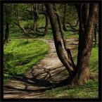 """mysliciel """"Spring"""" (2009-04-24 22:16:59) komentarzy: 3, ostatni: świetny kadr..."""
