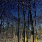 """-sever- """"wiosenne klimaty"""" (2009-04-25 12:29:54) komentarzy: 1, ostatni: Podoba mi się...;)"""