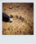 "Lleika """" (2009-04-27 21:08:15) komentarzy: 4, ostatni: a to świnia"