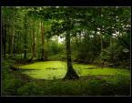 """nizu """""""" (2009-04-28 18:36:26) komentarzy: 8, ostatni: Ladnie wyszło podoba się"""