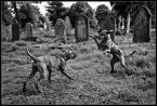 """kiloff jeden """"...straznicy..."""" (2009-04-29 16:12:32) komentarzy: 12, ostatni: teraz wiadomo gdzie wyprowadza się psy..."""