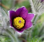 """ulka kalinowska """"W moim ogródku"""" (2009-04-30 17:19:00) komentarzy: 18, ostatni: mnie sie podoba"""