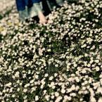 """izmy """"mój mi maj"""" (2009-05-04 08:43:37) komentarzy: 6, ostatni: :)"""