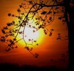 """asiasido """"wiosna w Lublinie 4"""" (2009-05-04 21:41:15) komentarzy: 14, ostatni: wielkie WOW"""