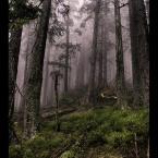 """amator_sliwek """"...w lesie jak to w lesie..."""" (2009-05-04 23:21:22) komentarzy: 5, ostatni: fajne, mroczne i tajemnicze, podoba się :)"""