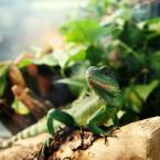 """mikb """"Prawie jak kameleon..."""" (2009-05-05 22:24:02) komentarzy: 8, ostatni: dinotopia"""