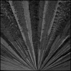 """Łukasz Pluta """"Każdy orze jak może..."""" (2009-05-07 22:33:28) komentarzy: 15, ostatni: heh.. chodziło mi ostatnio po głowie:-)"""