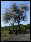 """Finiu """"Kopyśno - wieś widmo"""" (2009-05-13 20:44:21) komentarzy: 3, ostatni: kwiecie nadzieje wnosi"""