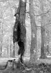 """Zeny """"Drzewa umierają stojąc"""" (2009-05-14 15:21:15) komentarzy: 13, ostatni: ( jamko-szamanko...? he he...)"""