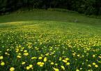 """bogumił pason """"Wiosenna suknia"""" (2009-05-15 17:22:01) komentarzy: 3, ostatni: ladnie"""