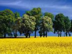 """wedrowiec1 """"Zółta wiosna"""" (2009-05-16 21:24:27) komentarzy: 22, ostatni: Bardzo dobre :)"""