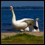 """Ralfik D """"Dance on the bank."""" (2009-05-18 21:14:41) komentarzy: 4, ostatni: Czasami trzeba rozprostować kości :)"""