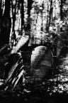 "Kasperthesuperphotographer ""cmentarz Zydowski"" (2009-05-19 01:22:17) komentarzy: 0, ostatni:"