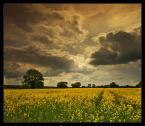 """pawello91 """"Ozłocone..."""" (2009-05-21 22:36:08) komentarzy: 3, ostatni: Super chmury moje klimaty !!!"""