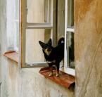 """asiasido """"szczekacz okienny"""" (2009-05-22 21:46:16) komentarzy: 22, ostatni: ..........;))))"""